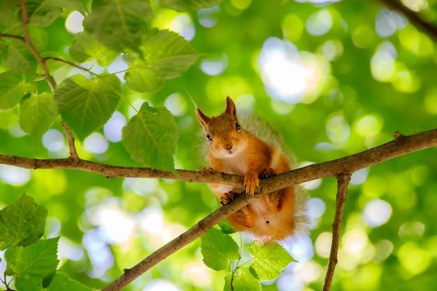 녹색 단풍에 다람쥐 근접 촬영