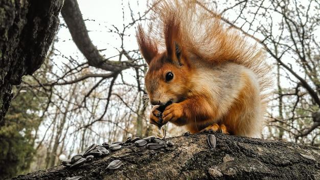공원에있는 나무에 씨앗을 먹는 다람쥐