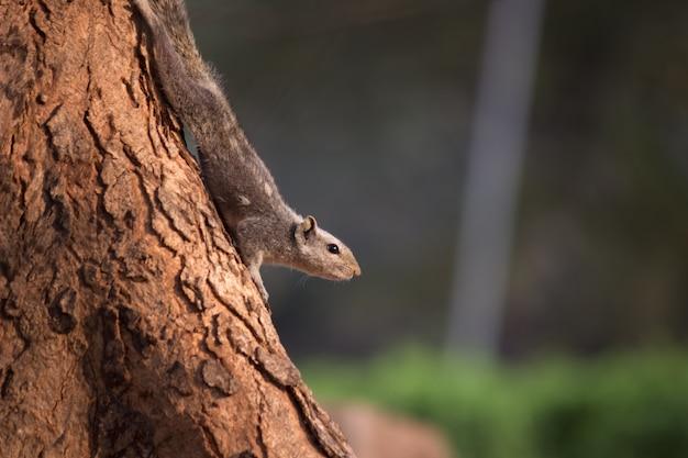 リスは木の幹を降りる