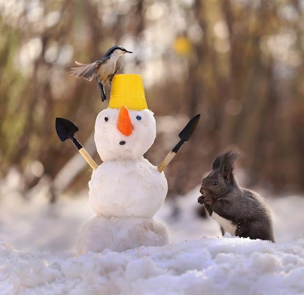 冬の森のリス