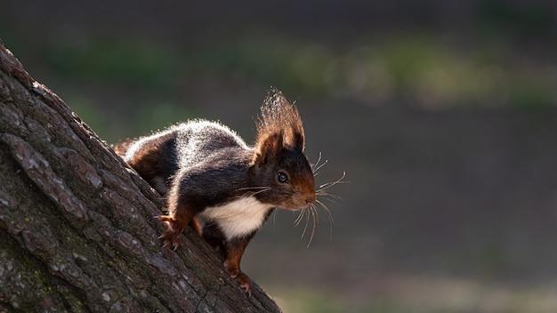 사진을 위해 포즈를 취하는 숲에서 다람쥐