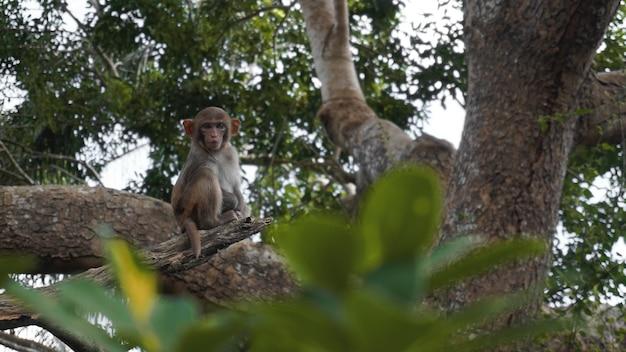 Обезьяна-белка в естественной среде обитания, тропических лесах и джунглях, играет и перемещается