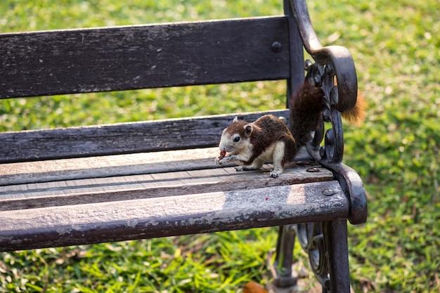의자에 앉은 다람쥐는 발에 견과류를 들고 그것을 먹습니다. 작은 재미있는 동물은 도시 공원에 산다