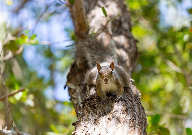 Белка на дереве в летнем парке