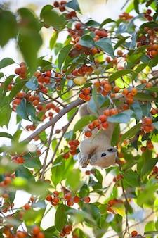 과일 음식을 먹는 나무에 다람쥐.