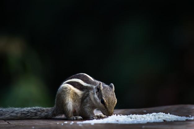 リスまたは齧歯動物、または柔らかくぼやけた背景の木の幹のシマリスとしても知られています