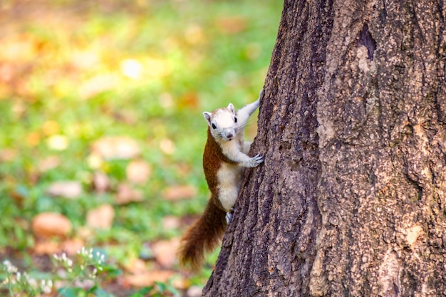 Squirrel perched on a tree trunk.