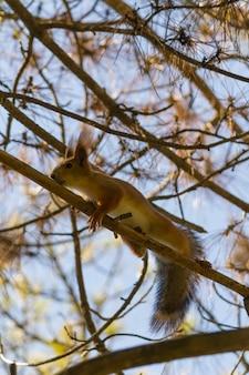 リスは枝で走る