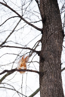Белка сидит высоко на дереве в лесу
