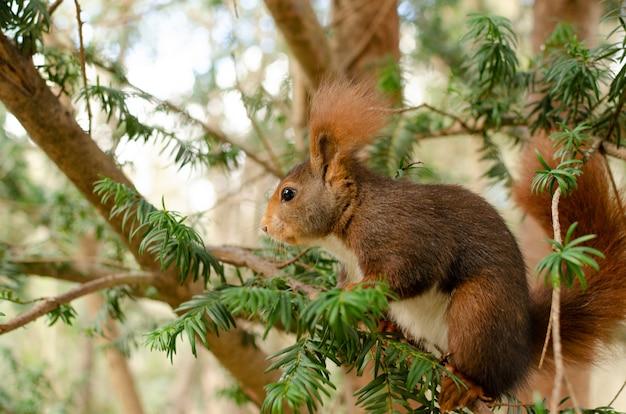 木の枝に座っているリス