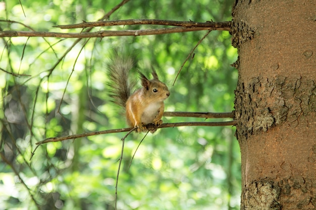 The squirrel sitting on a tree branch