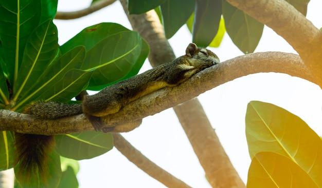 다람쥐 나무의 가지에 자