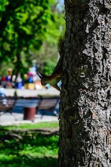 Squirrel on a tree in city park on spring