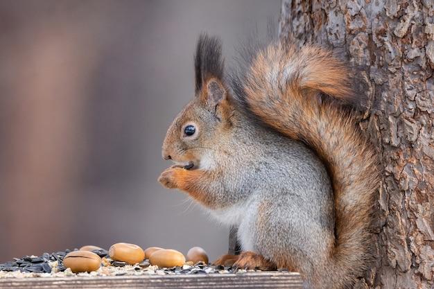 겨울에 나무에 다람쥐