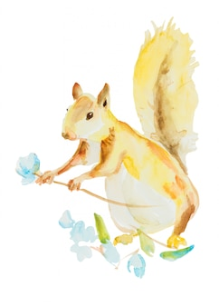 Squirrel with flower isolated