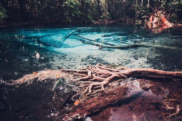 Голубой бассейн сра моракот в провинции краби, таиланд. ясный изумрудный пруд в тропическом лесу. корни деревьев с красивой лагуной в тропическом лесу. тонирование с перекрестной обработкой в стиле ретро и винтаж