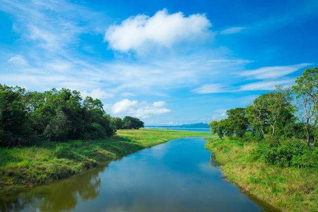 スリランカ湖、スリランカの風景、水上の木、湖の上の木