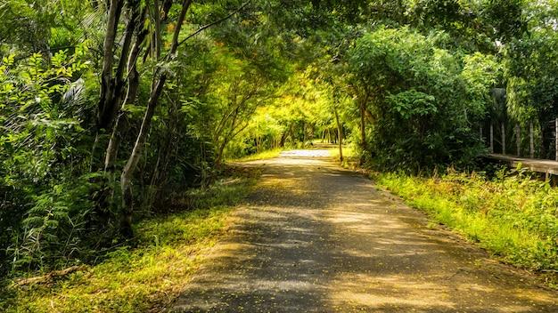 Sri nakhon khuean khan park and botanical garden은 공공 공원이며 태국 samut prakan의 bang kachao sub-district에 있는 방콕의 허파로 선언되어 빛과 오일 페인트 필터를 추가합니다.