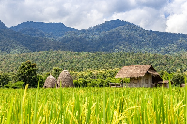 Srtaw hut inside rice field at huai thung tao lake in chiang mai, thailand surrounded by beautiful nature mountains and clouds