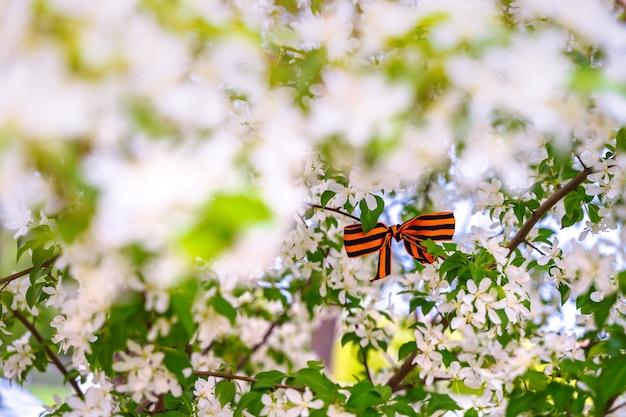 Георгиевская лента в виде праздничного банта на весенней цветущей яблони