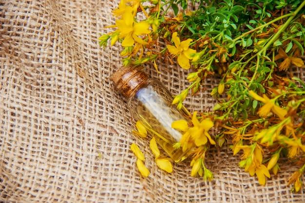 St. john's wort extract. medicinal plants. Premium Photo