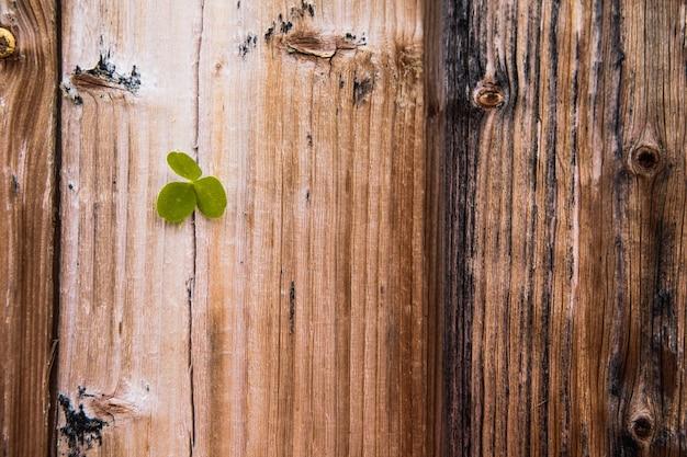 聖パトリックの日のコンセプト-木の板のシャムロック