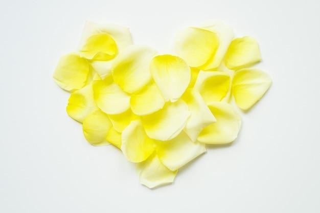 聖バレンタインデー。白地にバラの花びらから広げて置かれた心