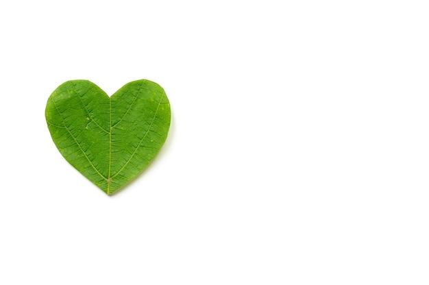 День святого валентина. сердце вырезано из листвы на белом фоне