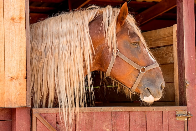 In the stable, the horse's head is brown. horseback riding. close-up.