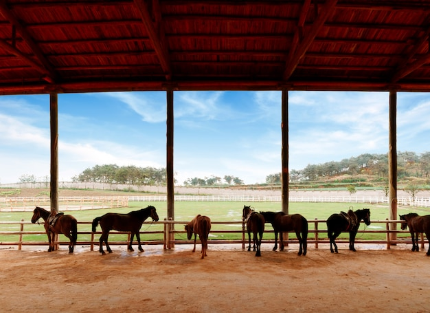 Stables and horses