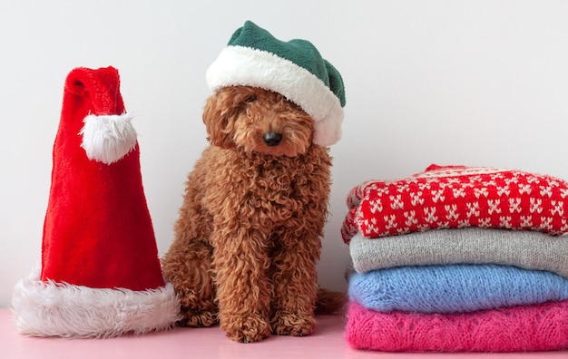 Next to a stack of christmas sweaters sits a small poodle in a green hat