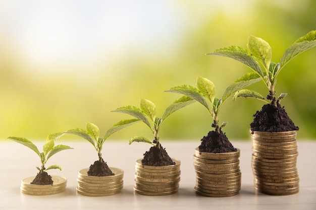 Stack of gold coins with a young plant on greenery