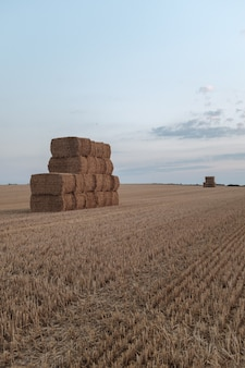 A stack of hay in a field