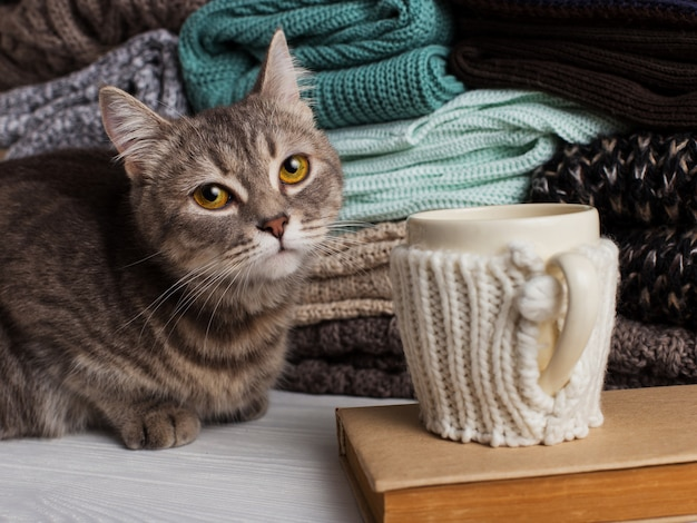 A stack of knitted clothes of different colors and textures, on the table next to a cup in a case, a book and a cat.
