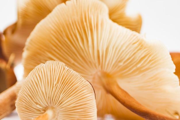 Pila di funghi
