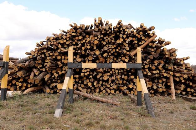 Стог отрезанной сосны регистрирует в лесе. древесина бревна, лесозаготовки, промышленные разрушения, леса исчезают, незаконные рубки. выборочный фокус.
