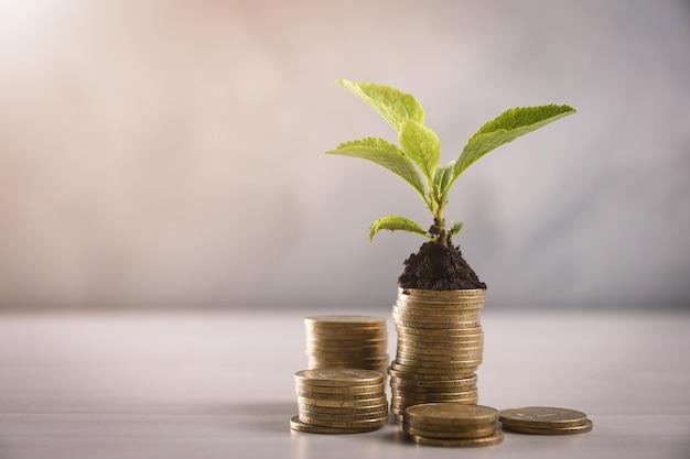 Стек золотых монет с молодым растением на сером столе. которые показывают рост. вид спереди. закрыть вверх