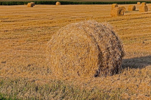 藁の山夏に収穫された穀物と藁が集まった農地