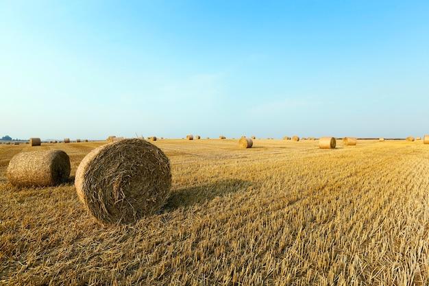 畑の藁の積み重ね小麦の収穫後に藁の干し草が積み重なった農地 Premium写真