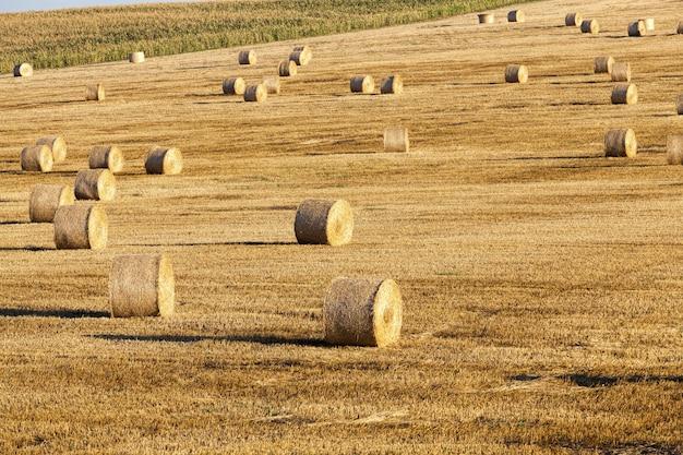 穀物の収穫後に残ったわらの山
