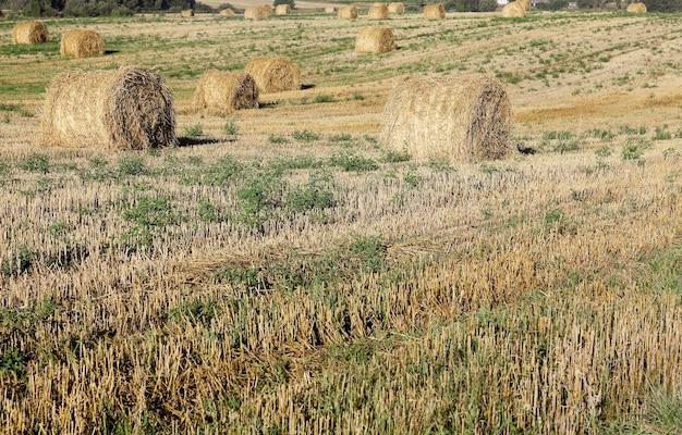 麦わらのスタック-収穫後に畑にある麦わらのスタック