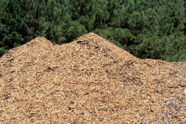 Stack of wood shavings