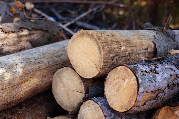 積み上げ薪、クローズアップ。丸太の幹が山積みになり、材木産業を伐採します。