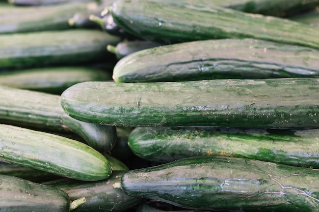 Stacked of harvested cucumber