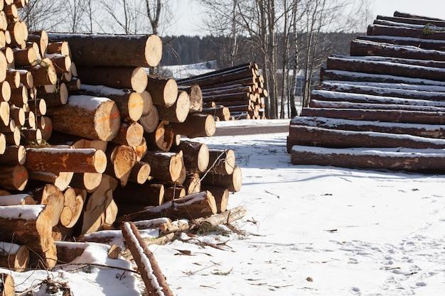 Штабелированные бревна сосны, ели в зимнем лесу. вырубка лесов на стадии ведения лесного хозяйства.