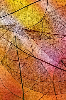 オレンジ色のバックライト付きの積み重ねられた透明な葉