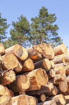 Сложенные стволы деревьев, срубленные в сосновом лесу
