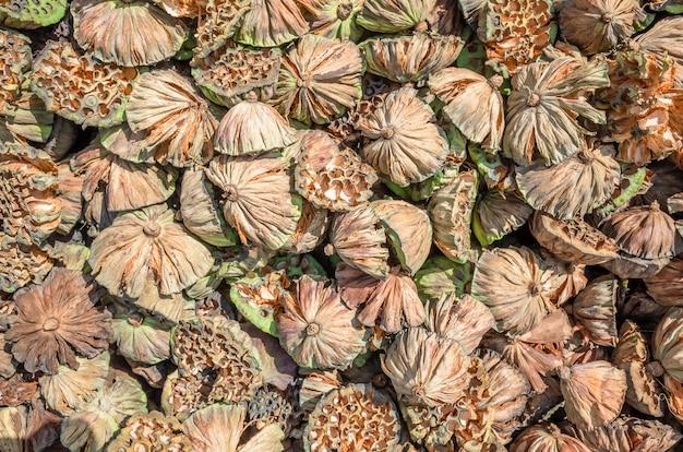 Stacks of dry seed pod of lotus