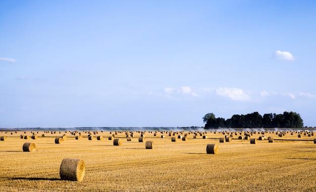 夏の農地で小麦を収穫した後、新鮮な無精ひげの上に横たわる麦わらのスタック