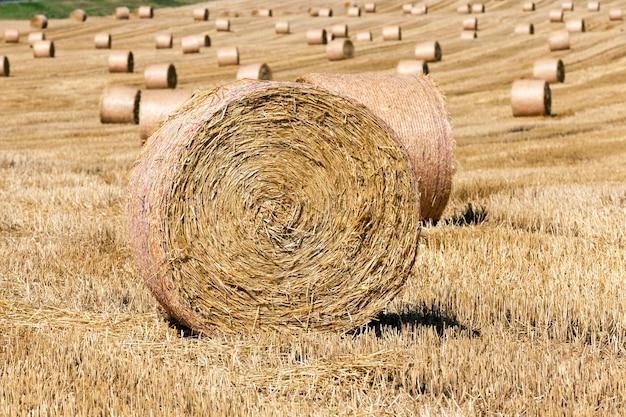 麦の収穫後、麦わらの山が残った